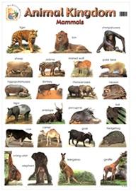 Wallchart Animal Kingdom